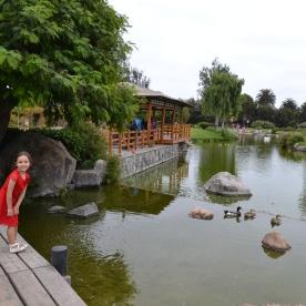 Kokoro no Niwa Jaanese Garden in La Serena