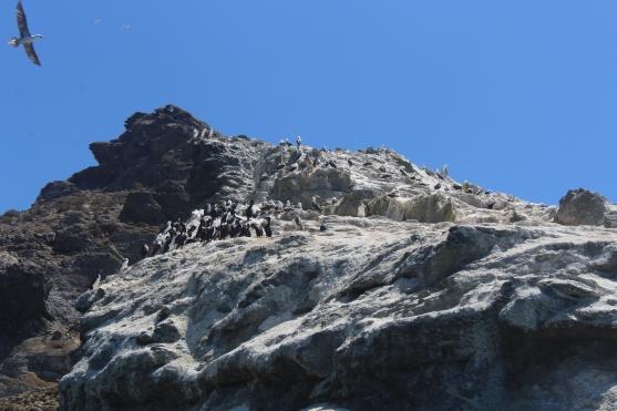 Isla Damas imagen